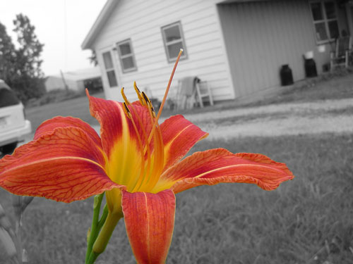 selective color photography-13